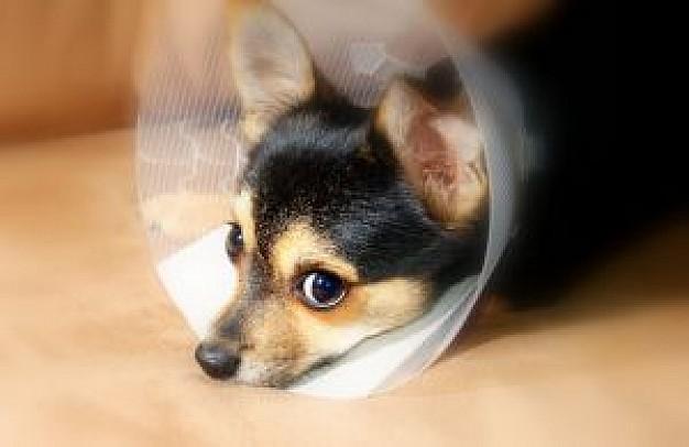 Assurance pour animaux de compagnie
